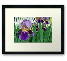 Purple Iris by the Fence Framed Print