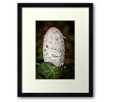 Shaggy Inkcap or the Lawyer's Wig Framed Print