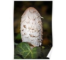 Shaggy Inkcap or the Lawyer's Wig Poster