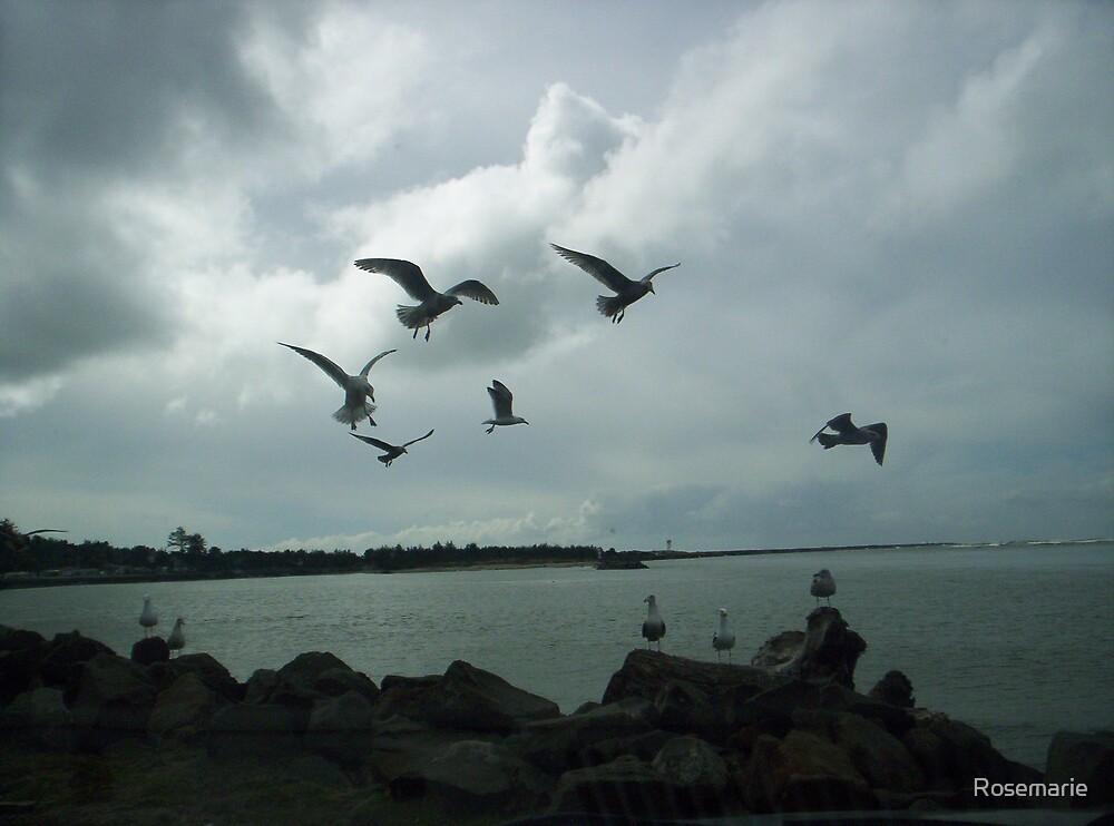 Gulls in flight-1 by Rosemarie