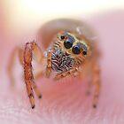Spider on fingertip by Gary  Conyard