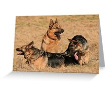 German shepard family Greeting Card