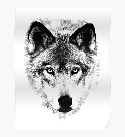 Wolf Face. Digital Wildlife Image. Poster