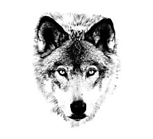 Wolf Face. Digital Wildlife Image. Photographic Print