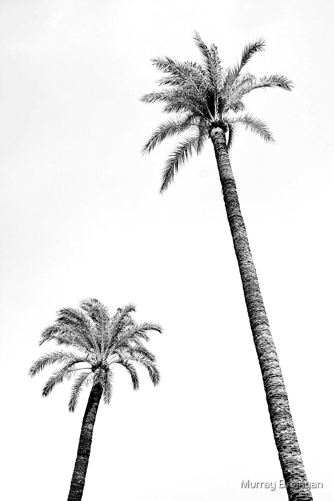 Palm Trees by Murray Breingan