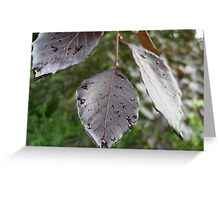 Leaves of Ireland Greeting Card