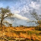 Natuurreservaat Kalmthout by Gilberte