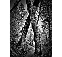 tree hugging Photographic Print