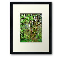 olympic national park Framed Print