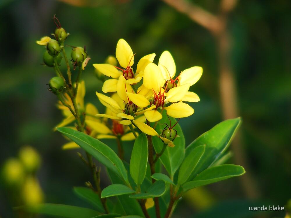 yellow......... by wanda blake