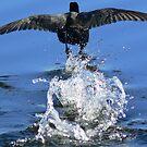Bird in a hurry by helmutk