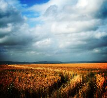 Fields of Gold by Murray Breingan