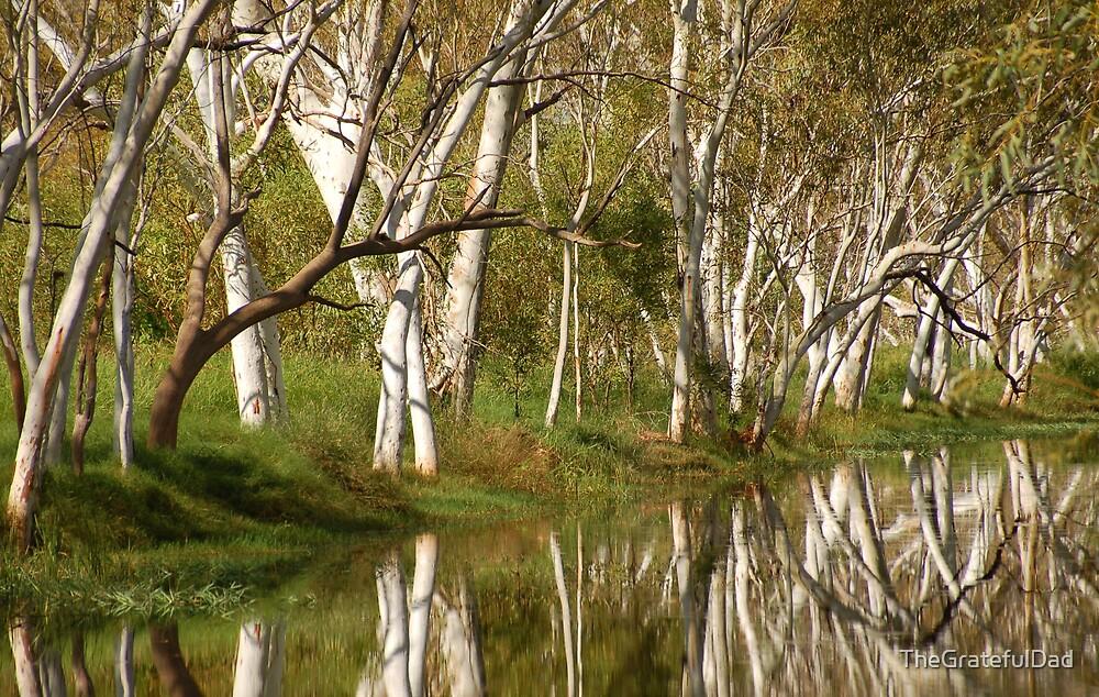 Outback Oasis by TheGratefulDad