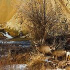 MULE DEER FAMILY by Sandy Stewart