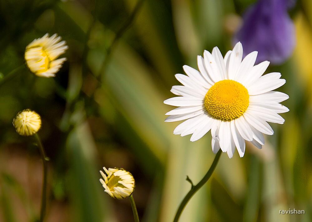 Blooming Flowers by ravishan