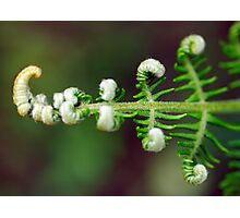 Fractal of nature Photographic Print