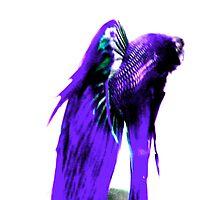 Blue Fish by Priscilla Crockett