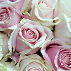 Roses by agnessa38