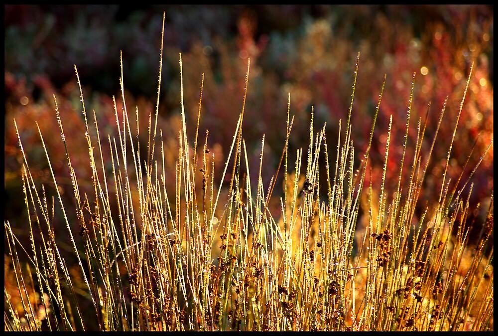 Morning Glow by Elana Halvorson