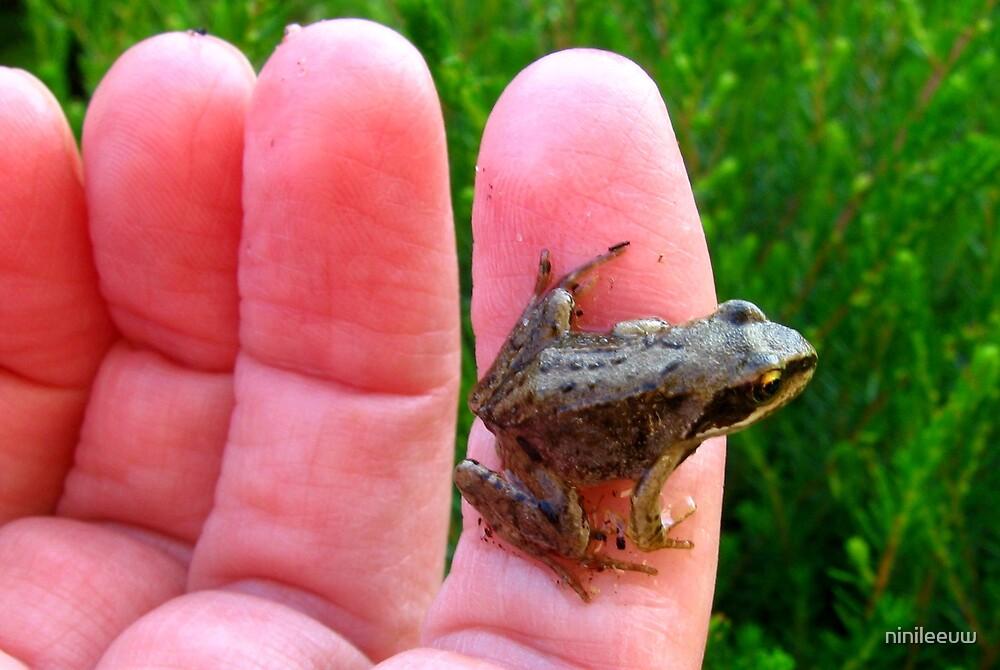 """mini-frog"" by ninileeuw"