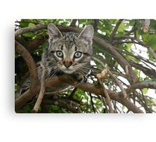 FRANKIE TIGGER, UP A TREE! Metal Print