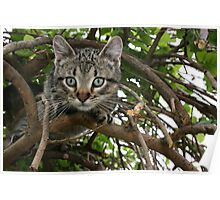 FRANKIE TIGGER, UP A TREE! Poster