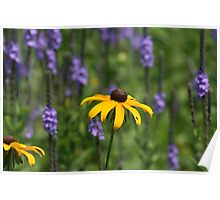 EARLY SUMMER WILDFLOWERS Poster