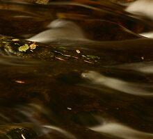 Fallen Leaves by Noel Elliot