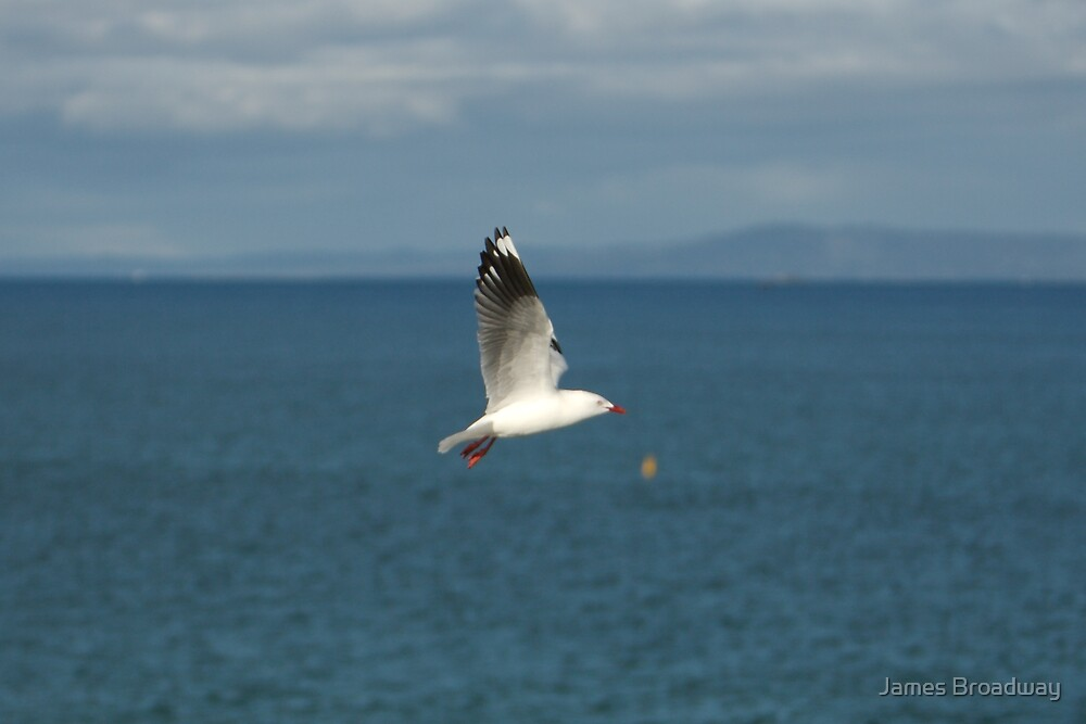 Gull #1 by James Broadway