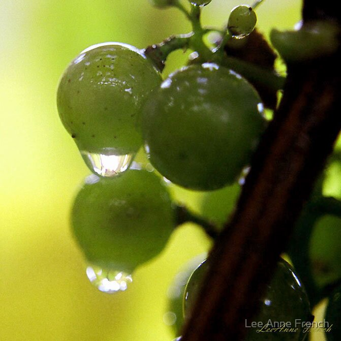 Green Grapes by Lee Anne French