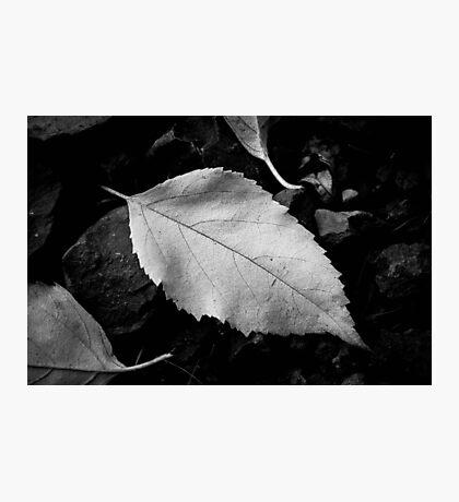 Simplistic Beauty Photographic Print