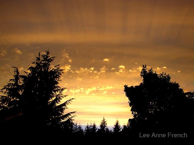 Rays of Hope by Lee Anne French