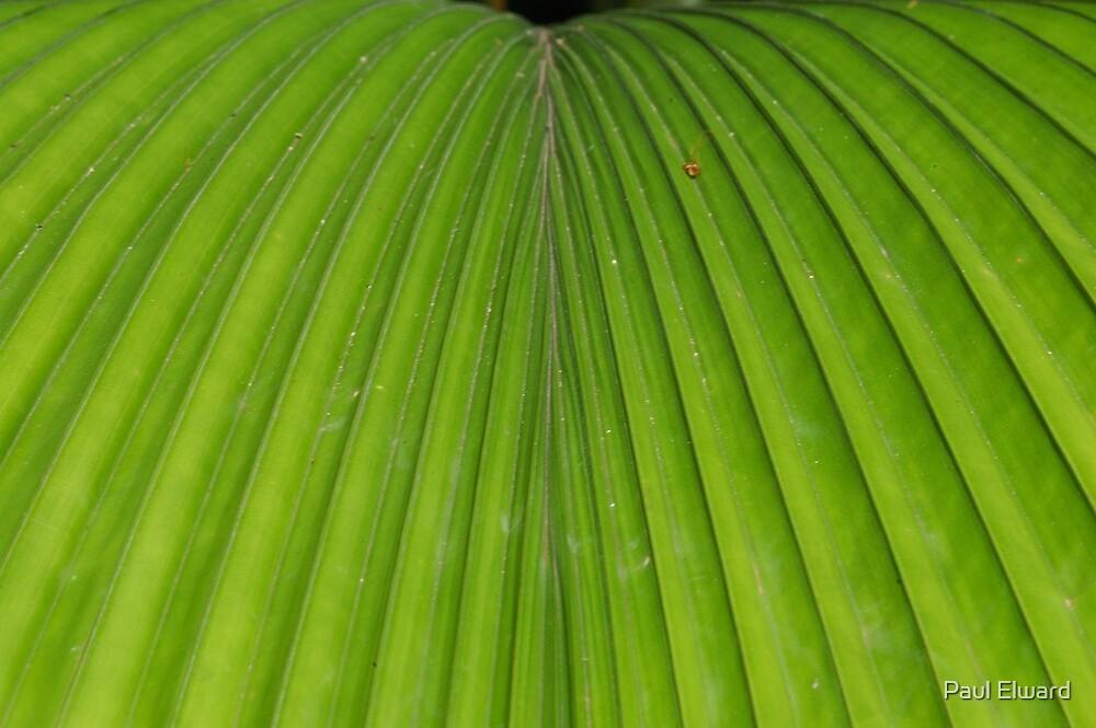 Palm Leaf by Paul Elward