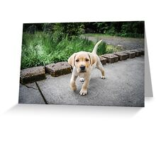 Puppy!!! Greeting Card