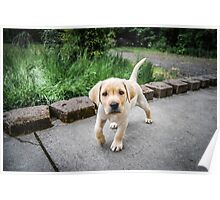 Puppy!!! Poster