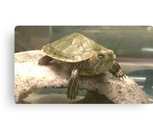 Bowser the baby turtle  Canvas Print