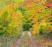 Autumn Two Track by Kenneth Keifer
