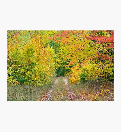 Autumn Two Track Photographic Print