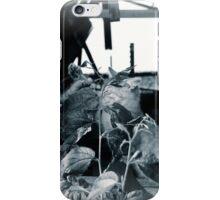Kitten spat iPhone Case/Skin