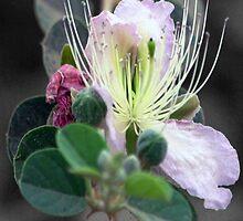 Desert Blossom by James Harrelson
