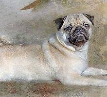 Pug Pose by Susan Werby