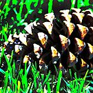Pine Cone Fun by heatherfriedman