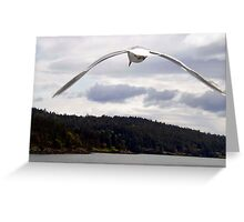 Soaring Greeting Card