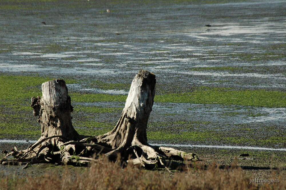 Tree Stumps by jeffmeyers