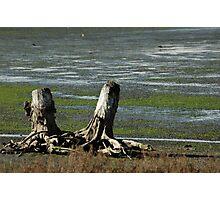 Tree Stumps Photographic Print