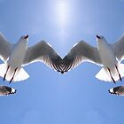 Heavenly Silver Gulls by sunnypicsoz