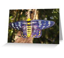 colourful moth - Queensland, Australia Greeting Card