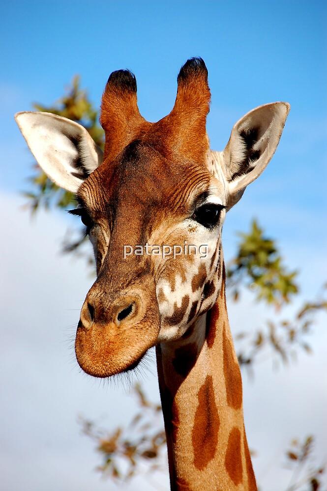 Giraffe - Monarto Zoo South Australia by patapping