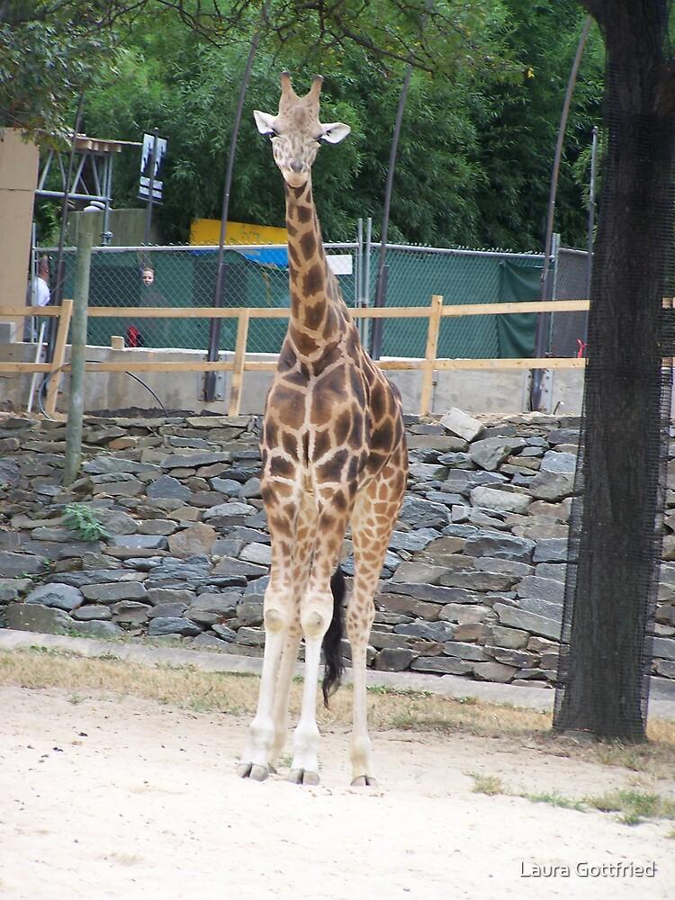 Giraffe by Laura Gottfried