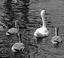 Swan Lake by lillyandlukysmommy